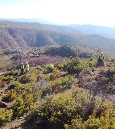 Tap Pipeline To Plant 400,000 Trees And Shrubs In Northern Greece
